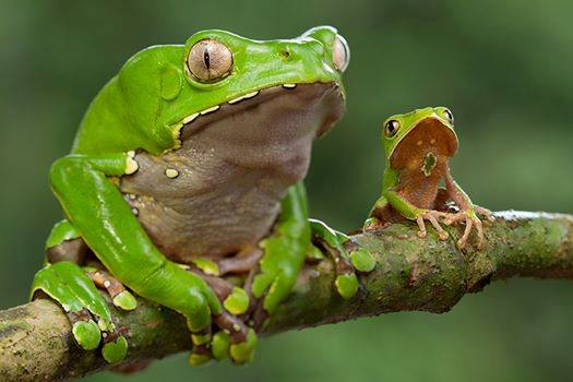Kambo Frog Medicine: Everything You Need to Know.